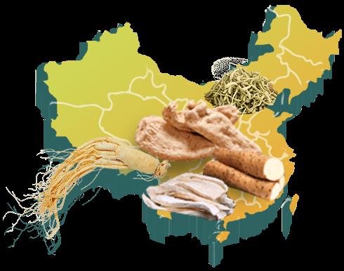 中国中药材信息网_中药材品种合作_康美中药城
